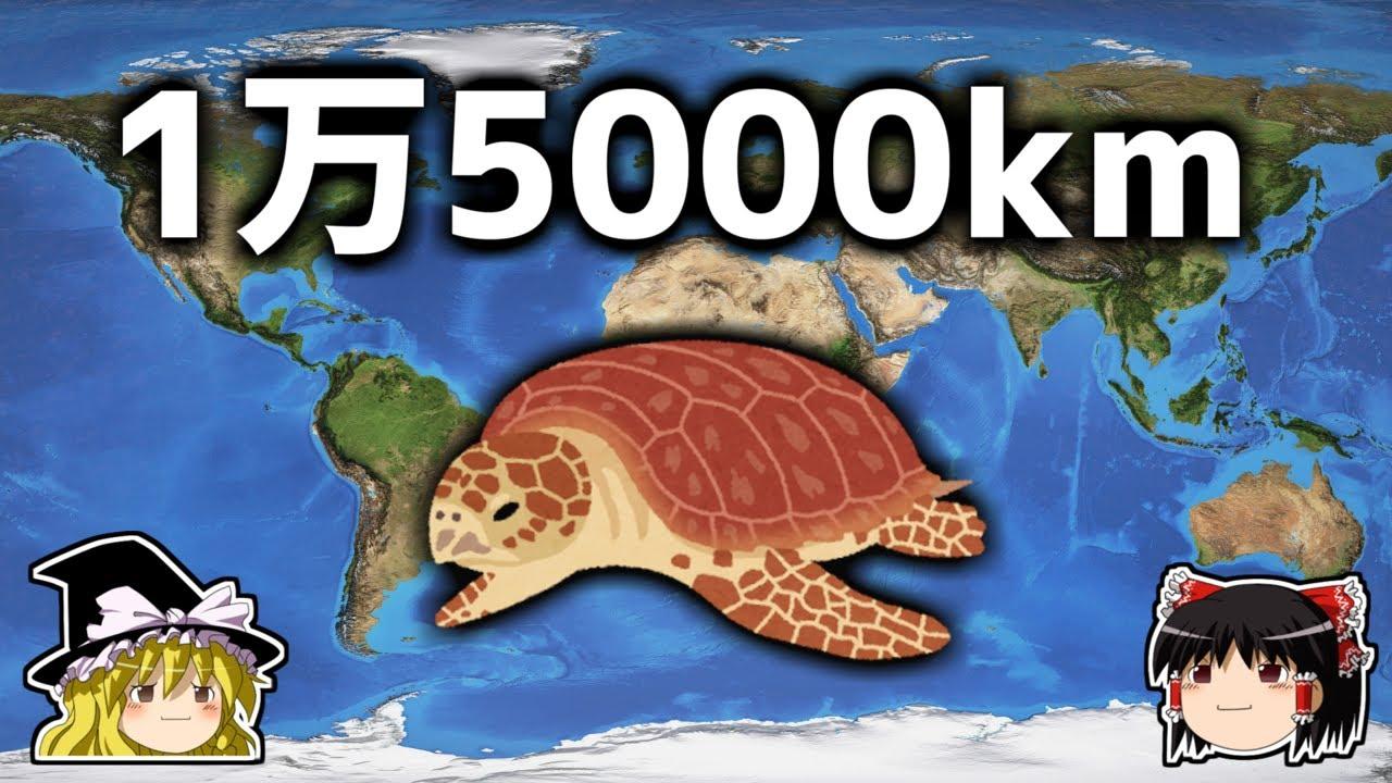 【ゆっくり解説】長距離でも絶対に迷わないGPS搭載生物「ウミガメ」