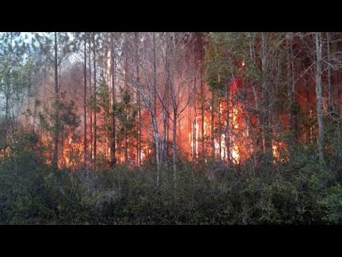Florida book burning sparks massive wildfire