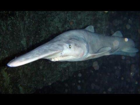 Люди попавшие под акулу