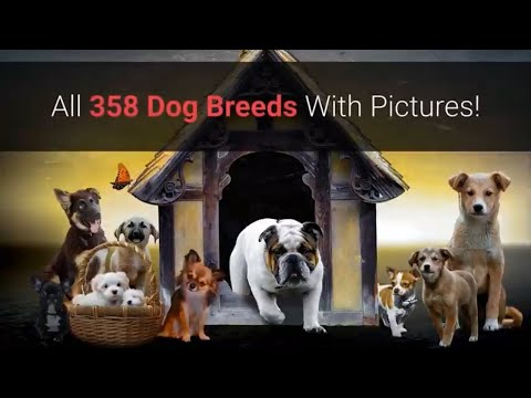 All Dog Breeds A-Z With Pictures! (all 358 breeds in the world)