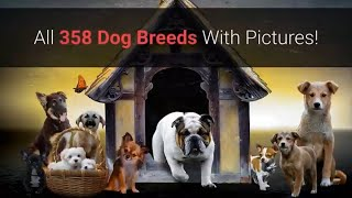 All Dog Breeds AZ With Pictures! (all 358 breeds in the world)