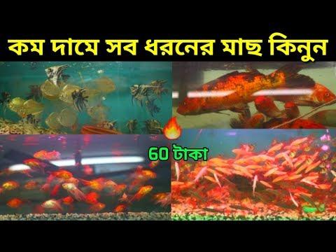 Buy Goldfish From Katabon At Dhaka | Goldfish Price in Bangladesh | Fish in bd