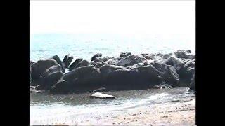 1997年6月7日晴れ 千葉県館山 ビーチボーイズ.