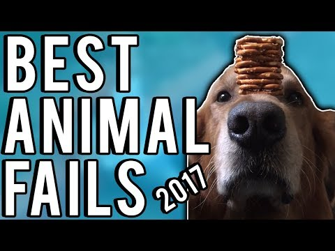 Animal Fails | The Best Of 2017 | A Fail Compilation By FailUnited