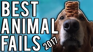 Animal Fails   The Best Of 2017   A Fail Compilation By FailUnited