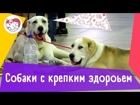 5 пород собак, обладающих крепким здоровьем