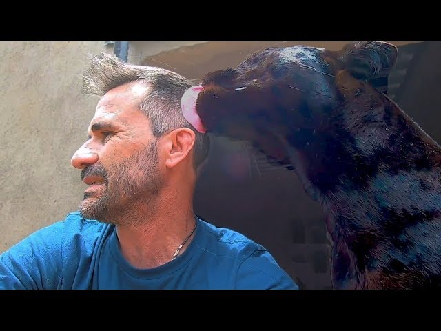Black Leopard Kisses! | The Lion Whisperer