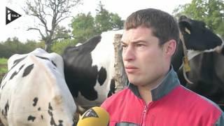 Un éleveur met en vente ses vaches sur Le Bon Coin