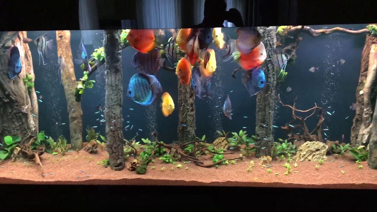 full decorated discus fish tank
