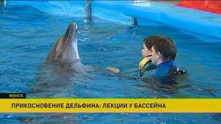 Прикосновение дельфина: лекции у бассейна