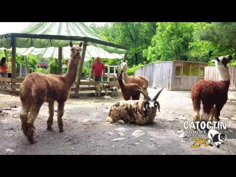 The Catoctin Wildlife Preserve and Zoo   VLOG 05-29-2017
