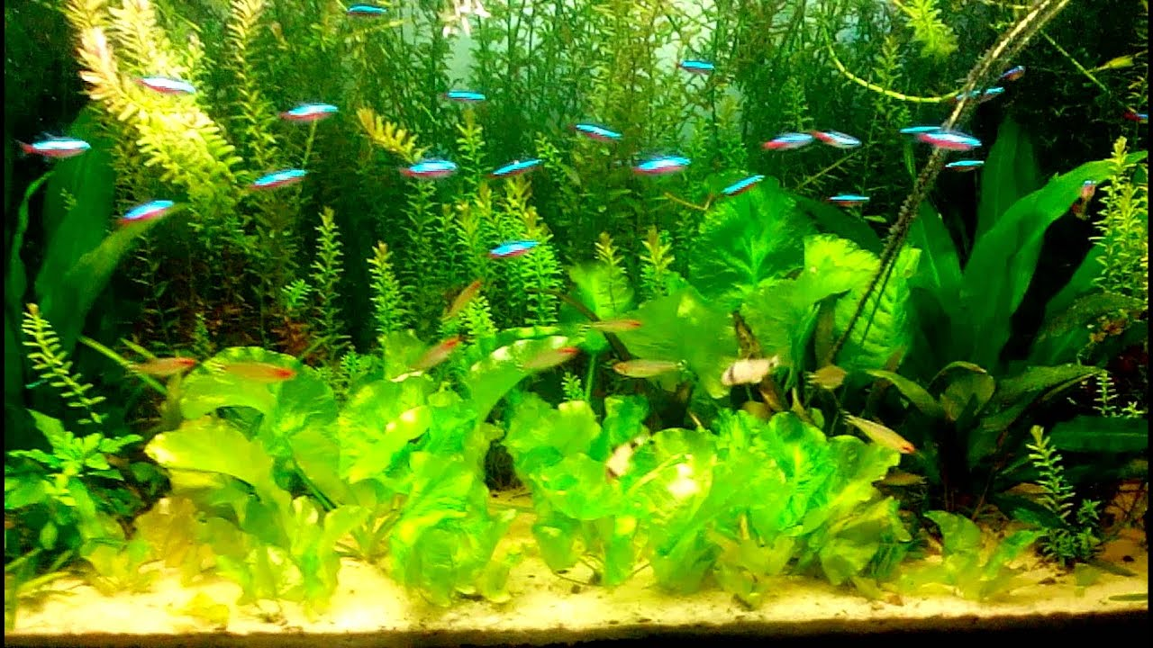 All natural fish tank youtube for Natural fish tank