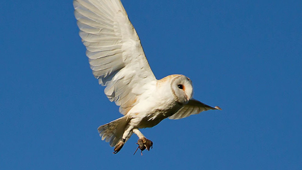 48 species of birds duke university research youtube