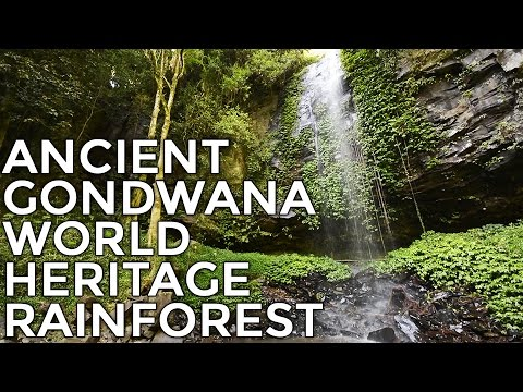 Waterfall & Rainforest Sounds for Relaxing, Sleep, Study, Me