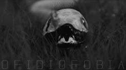 Narciso - Ofidiofobia (Audio Oficial)