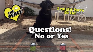 Our Dog Percy the Black Labrador answers 'YES' 'NO'