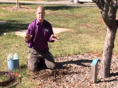 Water Wise Way To Irrigate Trees Youtube