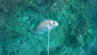 Подводная охота на юге Албании. Ψαροντούφεκο στην Αλβανία. Spearfishing in Albania