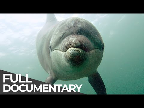 Ocean Stories 3 - Dolphins and Whales