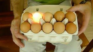 Jajka które świecą - Nauka. To lubię