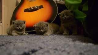 Смешные котята / Как Усыпить Котят Своими Руками / Смешное видео / Смеялся до слез