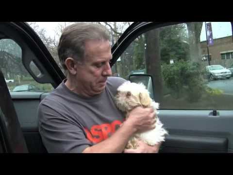 Puppy mill transport rescue to WARL - 109 dogs saved!