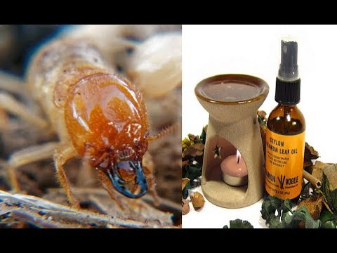 7 powerful remedies to rid your house of pests before it's too late