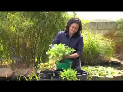 Greenfingers - Floating baskets: Using plants to filter your pond