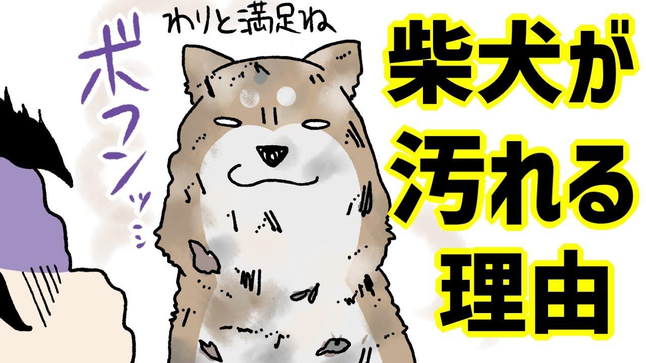 【犬まんが】柴犬がめちゃくちゃ汚れる理由とは!?