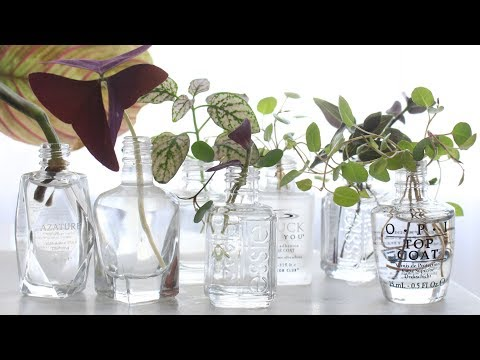 How to Propagate Plants in Water! | DIY Nail Polish Bottle Propagation!