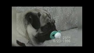 Funniest Pet & Animal Clips, Bloopers & Moments Caught On Tape ...