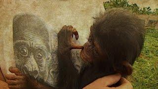 SPIEGEL TV vor 20 Jahren: Aids bei Affen
