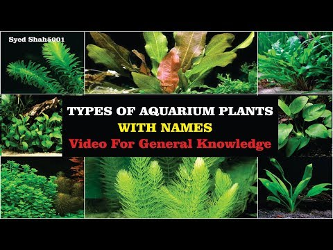 Types Of Aquarium Plants With Name's 2018 Aquarist Must Know