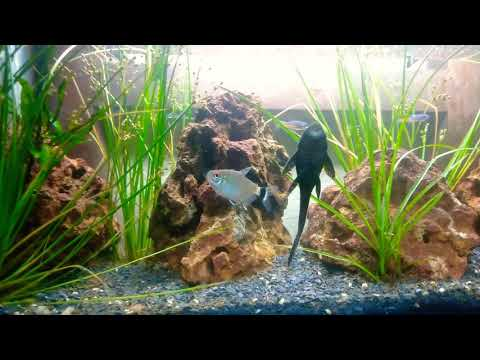 Aquascaping beginners guide