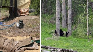 Bears Closing in on Camp, DIY Gasoline Powered Shower, AMAZING WILDLIFE DAY CAMPING!