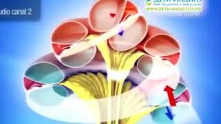 ТОМАТИС  педагогическая программа для стимуляции развития мозга(, 2017-01-18T12:49:05.000Z)