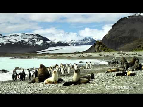 Hurtigruten - Antarctica, Falklands & South Georgia