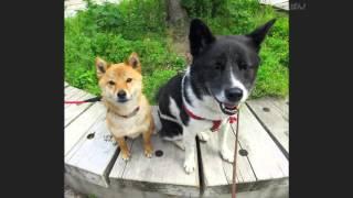 NHK Eテレ 0655 「ねこのうた・犬のうた」風の動画作製アプリ「思い出ぽ...