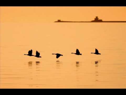 Paul Horn - Norwegian Wood (This Bird Has Flown) mp3