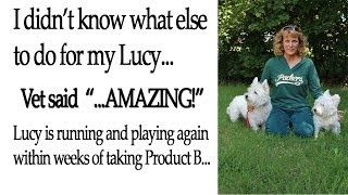 Product B Helped My 15 Yr Old Westie | 866-719-9727 | Vitmains For Westies | Pet Supplements