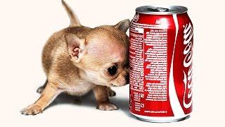 30 ПОРАЗИТЕЛЬНЫХ Фактов о Собаках!
