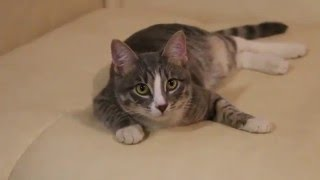 Кот крысолов под именем Марс