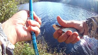 Рыбалка выходного дня на Латинском Разливе СПБ рыбалка