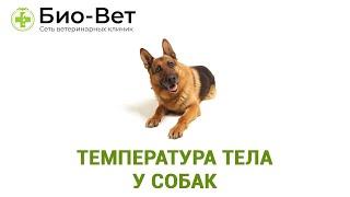 Температура тела у собак  норма и причины отклонения от нормы