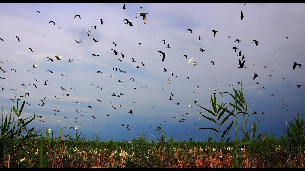 Картинки по запросу agh gol national park
