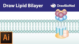 Graphical abstract tutorials  Draw cell membrane   life science illustration