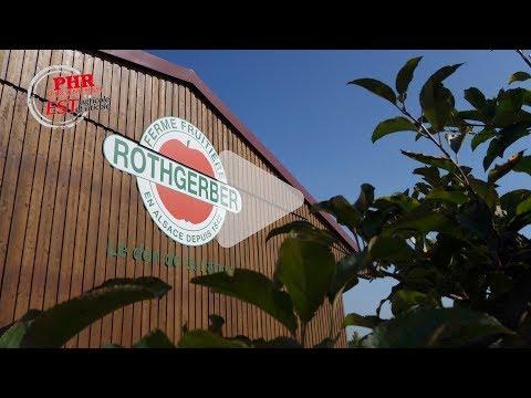 Rothgerber : une récolte de pommes bio en quantité et qualité