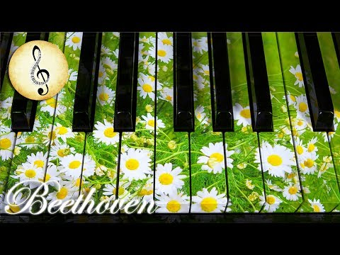 Beethoven Classical Music for Studying, Concentration, Relaxation   Study Music   Piano Music
