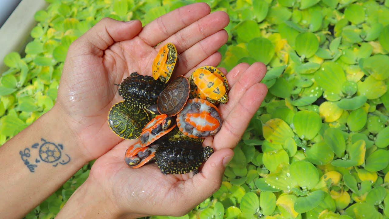 New Cute Rare Baby Turtles Youtube