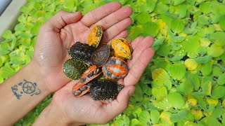 New! Cute Rare Baby Turtles!